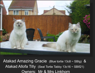 Atakad Amazing Gracie  (Blue tortie 13c8 ~ SBIg)  &  Atakad Allofa Tilly  (Seal Tortie Tabby 13c16 ~ SBIf21)   Owners:  Mr & Mrs Linkhorn